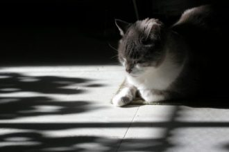This is one of my favorite images of Jack. He loved sunshine and sought it out any time he could.